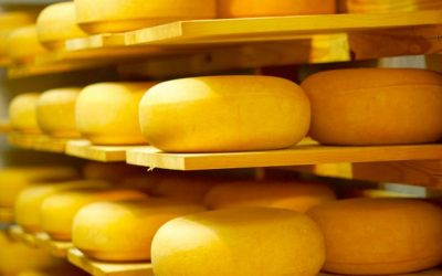 BB Kappa Casein Boosts Cheese Yield